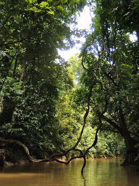 Sungei Chini (de Chini rivier verbindt het meer met de Pahang rivier)