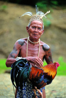 Image result for Chickens Are First Domesticated for Cockfighting, Not for Food