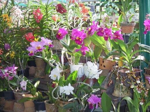 Orchideeen te koop